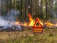 Bränning kärnskogsmossen